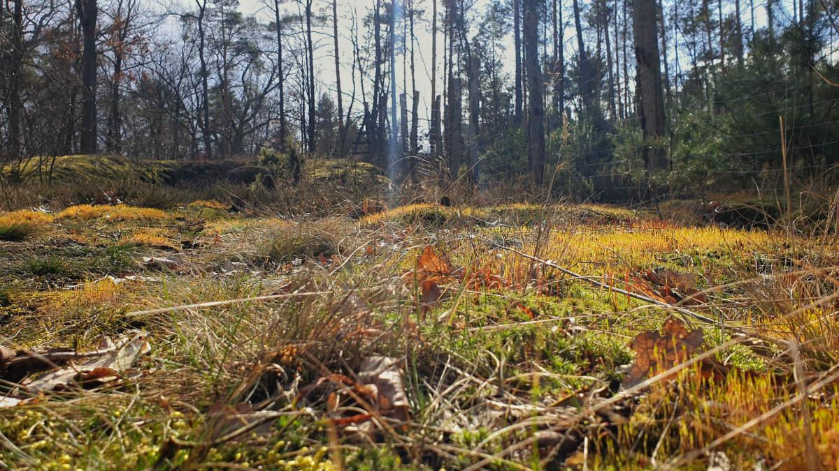 Rajszew działki przy lesie