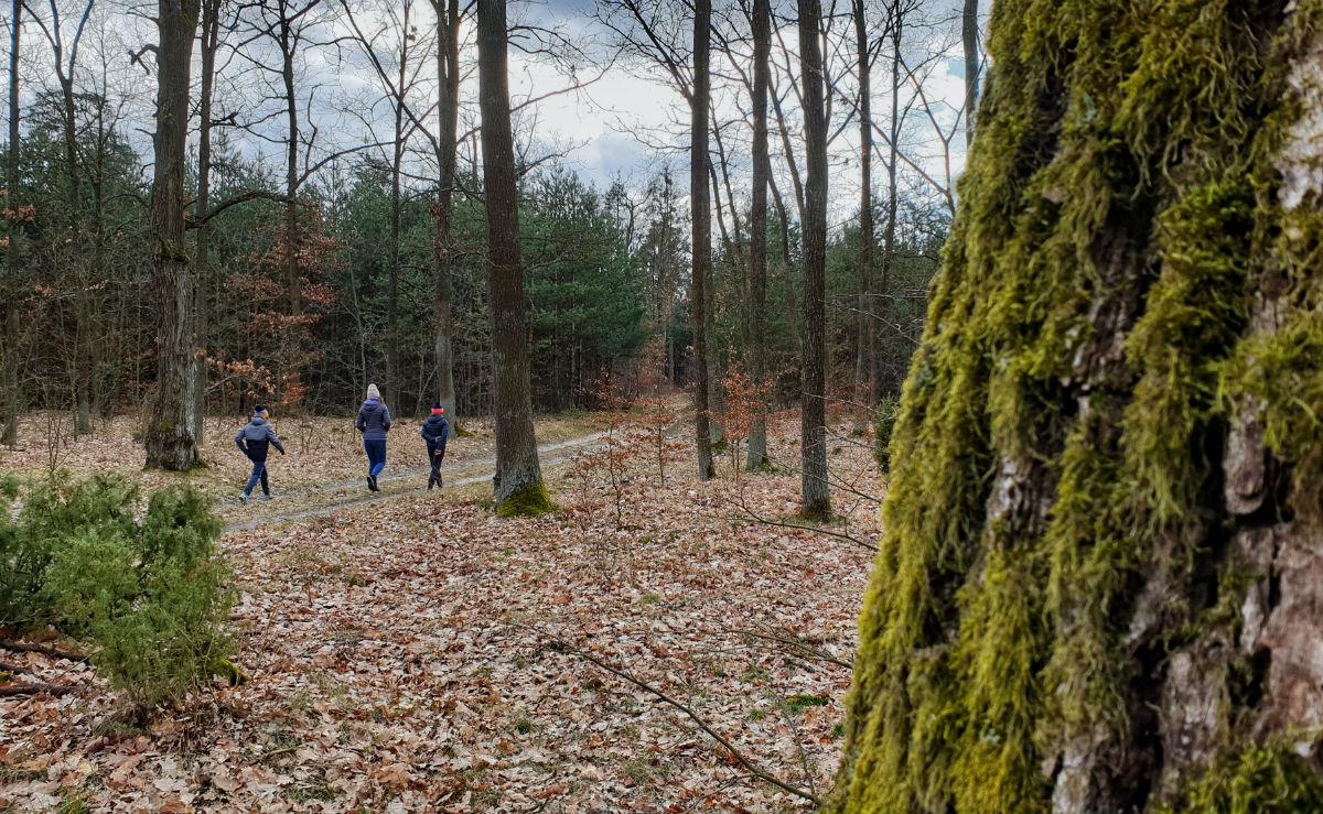 czy warto zamieszkac w rajszewie - blisko las spacery